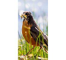 bird species Photographic Print