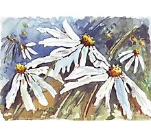 Daisy Love in Summer Photographic Print