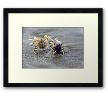 In A Crabby Mood Framed Print