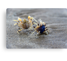 In A Crabby Mood Canvas Print