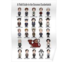 A Field Guide to the Common Cumberbatch (print/poster/card) Poster