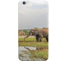 Elephants crossing the Chobe River iPhone Case/Skin