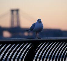 Bird Sunrise by abq26