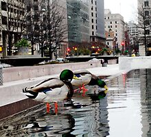Ducks 'n' the City by fuzzyfocus