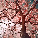 Sakura by anwarsalim