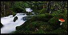 Meander Forest Mushroom Pan by Robert Mullner