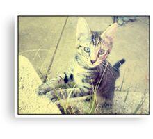 Chibi-chan - Tabby Cat Metal Print