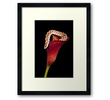 Western Hognose Framed Print