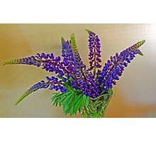 Luscious Lupin Photographic Print
