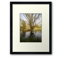 A willow, reflected in the water Framed Print