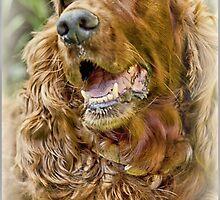 Golden Retriever portrait by flashcompact