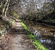 Union Canal Towpath by Tom Gomez