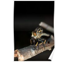 The Robber Fly Poster