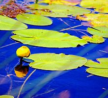 Even water celebrates with flowers by Kelly  McAleer