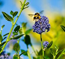 Worker Bee, Staffordshire, Midlands, UK. by Jonathan Fletcher