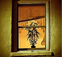 Window With Potted Plant by Jean Gregory  Evans