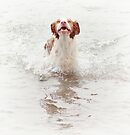 Splashing Around by Helen Green