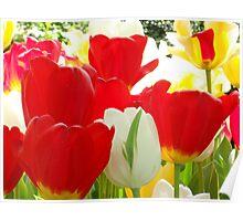 Gotta love Tulips Poster