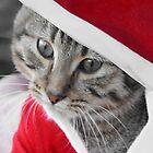 Santa Cat - A Tabby Cat Kitten at Christmas by simpsonvisuals