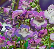 Singing the blues or is it the purple hues by Elaine Game