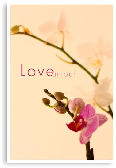Orchid Love/Amour by Vanpinni
