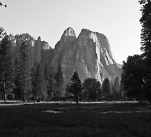 Meadow View, Yosemite by ejlinkphoto