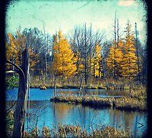 Wetlands Through The Viewfinder by Debbie-Anne Parent