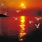 Seagulls in the sunset by jomtien