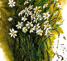 When Daisies Pied by ©Janis Zroback