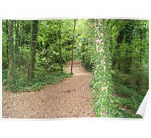 arboretum path Poster