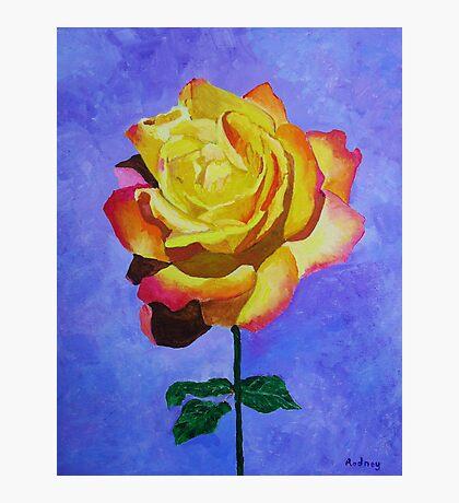 Tea Rose Photographic Print