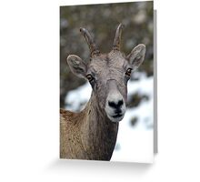 Posing Greeting Card