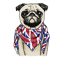 BRITISH PUG Photographic Print