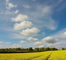 Fields of Yellow by ShawnsPhotos