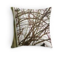 Sharp-shinned Hawk Under Observation, Hamburg, NY Throw Pillow