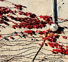Vines & Red Leaves by joAnn lense