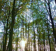 Normanby Woodland by SweetLemon