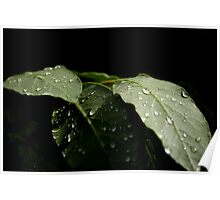 Leaf with rain drops 9940 Poster