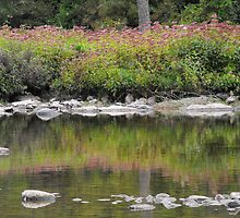 River Bank Reflections. by Tracy Faught