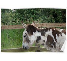 Pepper the donkey Poster
