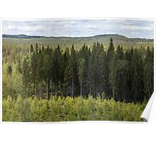 Spruce forest Poster