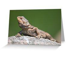 bearded dragon on a rock Greeting Card