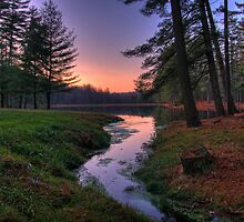 Remote Forest Lake Sunset by Michael Mill