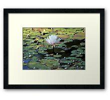 Water Lily V Framed Print