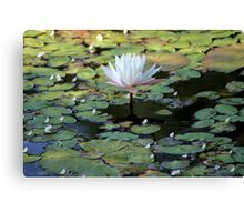 Water Lily V Canvas Print
