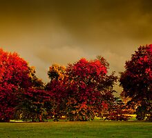 Mossvale Park  by James  Archibald