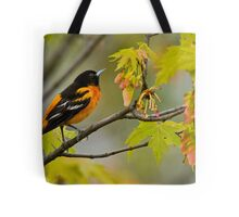 Northern Oriole looking for supper - Ottawa, Ontario Tote Bag