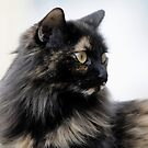 Our cat, Sophie by okcandids