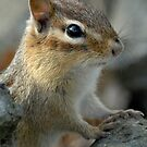 Chippy closeup by okcandids