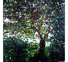 Tree of life, nature landscape Photographic Print